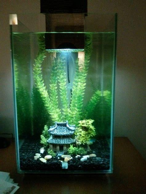 100 best 25 axolotl tank ideas best 25 turtle aquarium ideas on turtle tanks