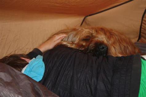 Luchtbed Hond by Op De Cing Hondenforum