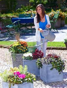 Gräser Kübel Terrasse : herbstdeko bl tenfeuerwerk auf balkon und terrasse das gr ne medienhaus ~ Markanthonyermac.com Haus und Dekorationen