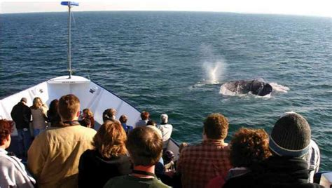 Whale Watching Boat Tours San Diego Ca by Whale Watching San Diego Hornblower Cruise Discount 50 Off