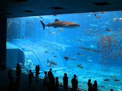aquarium fond d cran gratuit
