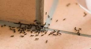 Mücken Im Haus Was Tun : milben im haus die sch nsten einrichtungsideen ~ Markanthonyermac.com Haus und Dekorationen