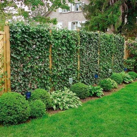 Plant Trellis Design  Woodworking Projects & Plans