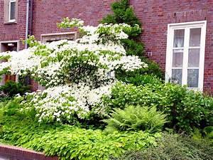 Baum Für Schattigen Vorgarten : b ume vorgarten nordseite tipps f r die vorgartengestaltung vom fachmann haas galabau ~ Markanthonyermac.com Haus und Dekorationen