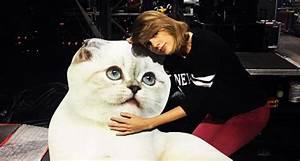 Meet Taylor Swift's Cats- Olivia Benson and Meredith Grey ...