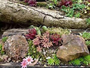 Steingarten Ideen Bilder : einen steingarten anlegen nachgeharkt ~ Whattoseeinmadrid.com Haus und Dekorationen