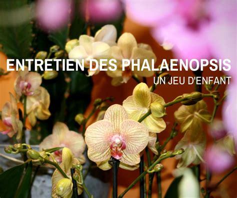 entretien phalaenopsis soin arrosage et taille