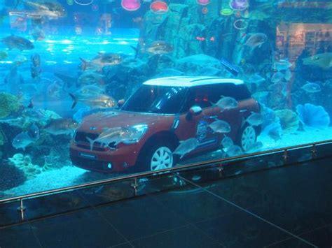 dubai aquarium picture of dubai aquarium underwater zoo dubai tripadvisor