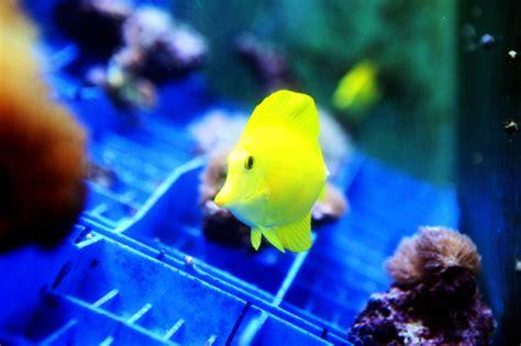 vente poisson d aquarium 28 images vente de poisson d aquarium poisson naturel poissons d