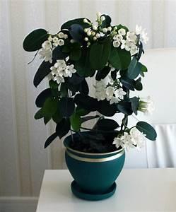 Pflegeleichte Zimmerpflanzen Mit Blüten : pflegeleichte zimmerpflanzen 18 vorschl ge ~ Markanthonyermac.com Haus und Dekorationen