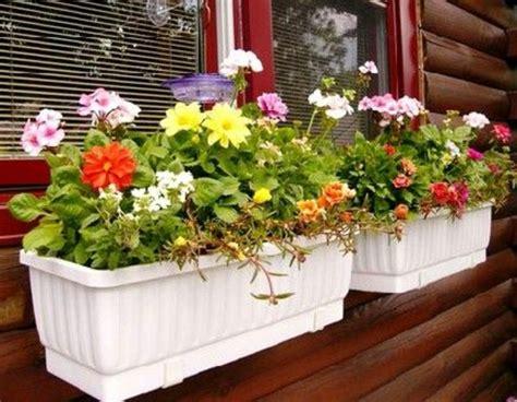 choisir une plante pour jardini 232 re quelques id 233 es et astuces
