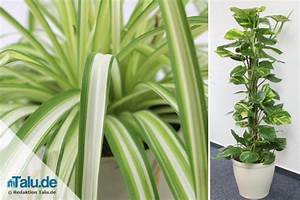 Pflegeleichte Zimmerpflanzen Mit Blüten : pflegeleichte zimmerpflanzen 8 bl hende und gr npflanzen ~ Markanthonyermac.com Haus und Dekorationen