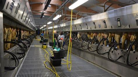 reportage vid 233 o 233 levage laitier allemand de 1600 vaches weimar neumark