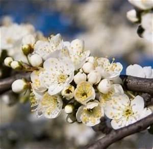 Garten Was Tun Im März : gartenjahr das gartenjahr m rz garten jahr ~ Markanthonyermac.com Haus und Dekorationen