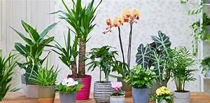 Pflanzen Für Wohnzimmer : pflanzen fensterbank alles ber wohndesign und m belideen ~ Markanthonyermac.com Haus und Dekorationen