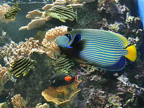 fond 233 cran poisson aquarium de monaco
