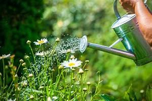 Pflanzen Bewässern Mit Plastikflasche : pflanzen mit bier gie en ein toller pflanzend nger ~ Markanthonyermac.com Haus und Dekorationen