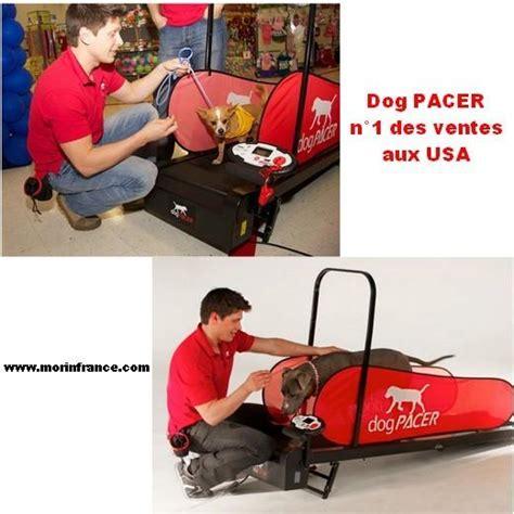 tapis de course pour chien a vendre id 233 e de la maison de la galerie