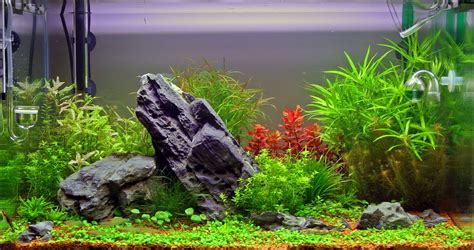 aquarium live plants for nature aquariums