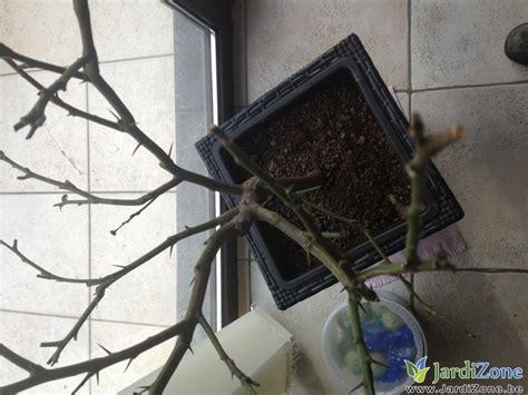 citronnier a perdu toutes ses feuilles jardizone