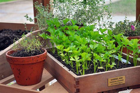semer du persil et du panais d 233 tente jardin