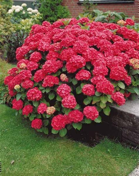 les 25 meilleures id 233 es concernant hortensia sur jardin d hortensia jardin de
