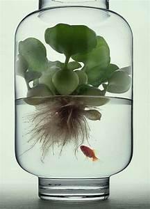 Coole Aquarium Deko : die 25 besten goldfisch im glas ideen auf pinterest ~ Markanthonyermac.com Haus und Dekorationen