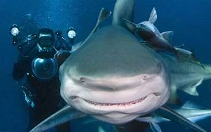 Sharks really do have personalities, study finds - Telegraph