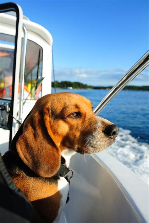Boat Dog Quotes by Nboat Blog Boat Insurance Marine Insurance Boat
