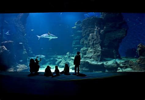 aquarium mare nostrum de montpellier parc attraction aquariums montpellier 34000