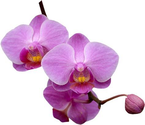 lylou collection une histoire d orchid 233 es
