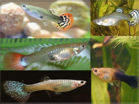 d 233 marrer un aquarium et choix des poissons d eau chaude photos de poissons d eau chaude