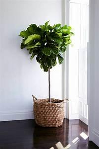 Pflanzen Für Wohnzimmer : 65 vorschl ge f r dekoration im wohnzimmer ~ Markanthonyermac.com Haus und Dekorationen