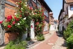Kletterrosen Richtig Pflanzen : kletterrosen befestigen so machen sie 39 s richtig ~ Markanthonyermac.com Haus und Dekorationen