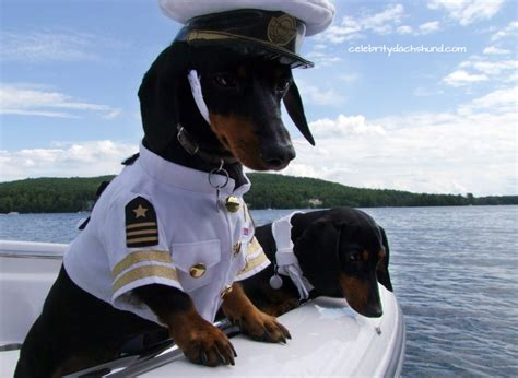 Boat Driving Dog by Dachshunds On A Boat Captain Crusoe First Mate Oakley