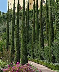 Mediterraner Garten Winterhart : italienische zypresse 39 totem 39 produktbild evergreen trees pinterest garten mediterraner ~ Markanthonyermac.com Haus und Dekorationen
