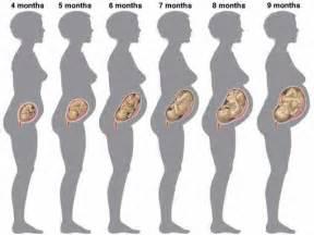6 mois de grossesse 33 cm et 700g ouie et toucher