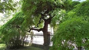 Dekorative Bäume Für Kleine Gärten : b ume kleine b ume hausb ume pflanzen f r die vorgartengestaltung baumlexikon laubb ume zur ~ Markanthonyermac.com Haus und Dekorationen