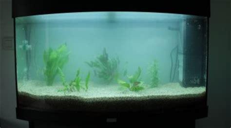 conseils pour mon premier aquarium en eau douce