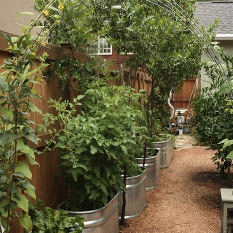 Container Gardening  Growing Vegetables In Urban Planters