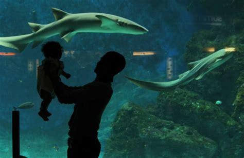 aquarium de lyon sortie aquatastique en famille