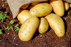 Kartoffeln Und Zwiebeln Lagern : kartoffeln lagern so geht s richtig ~ Markanthonyermac.com Haus und Dekorationen