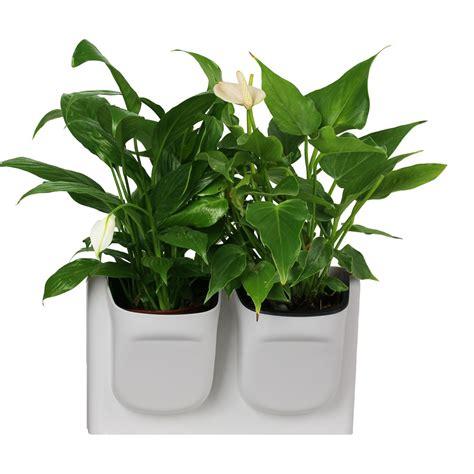 decorative house plant pots for sale house home plans ideas picture