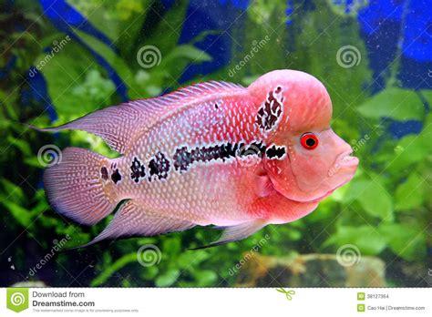 beaux poissons d aquarium dans le images stock image 38127364