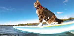 A surfboarding cat is joined by a group of dogs on the ...