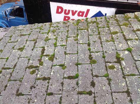 Moss Eats Away Roof Shingles In Tewksbury, Ma Roll Of Roof Flashing Camper Sealant Photos Roofing Contractors Buffalo Mn How Much Is A Flat Replacement Solar Tiles Vs Panels Memphis Supplies Melbourne Florida
