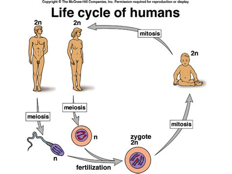 Cycle Cycles Of Life