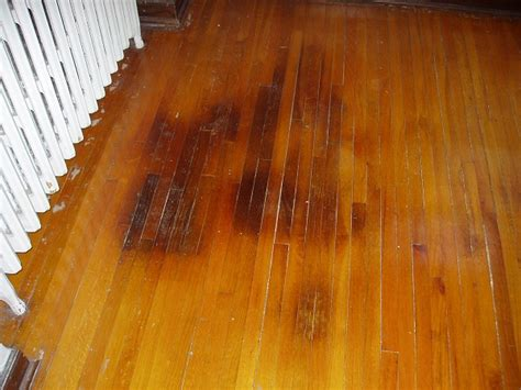 how to get rid of urine smell in house from carpet
