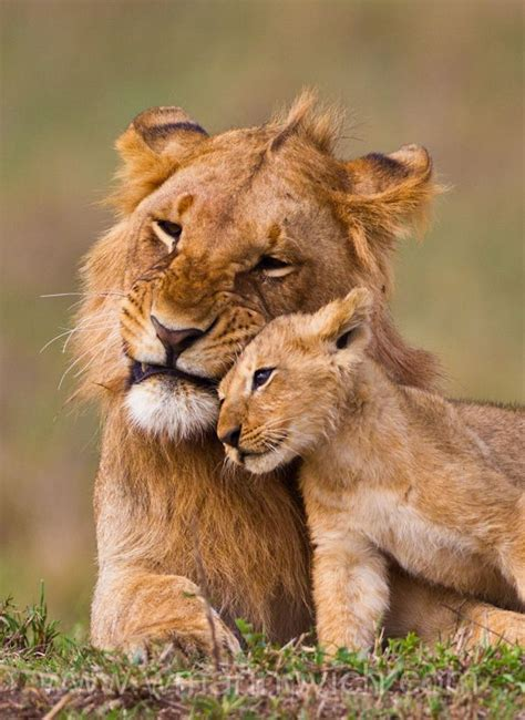 21 Best Images About Born Free On Pinterest Friendship