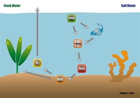 comment d 233 marrer rapidement aquarium eau douce mer cycle azote prodibio